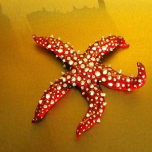 Spiny Starfish Sculpture