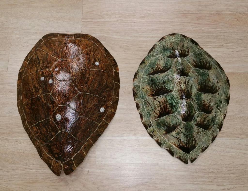 Ed Koehler Designs Sea Turtle Shells