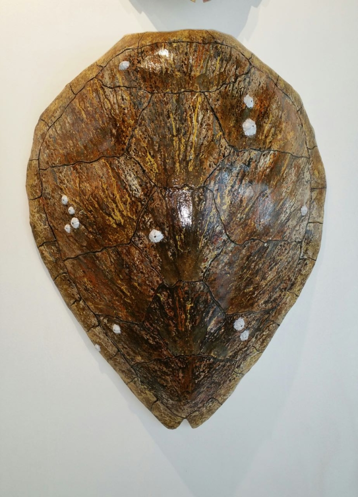 Ed Koehler Designs Sea Turtle Shells