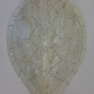 White turtle shell