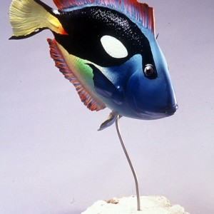 Blue Surgeonfish Sculpture [approx. 16in]