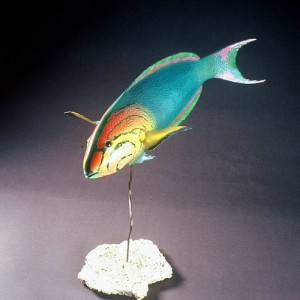 Yellow-Headed Wrasse Sculpture [approx. 16in]